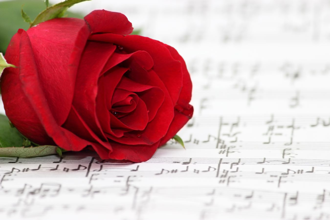 Rose accompanying a music sheet.